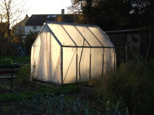 Greenhouse (Polythene)