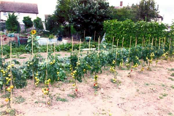 About Ashford Allotment Society
